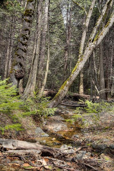 2006-04-21 Yosemite_MG_2150