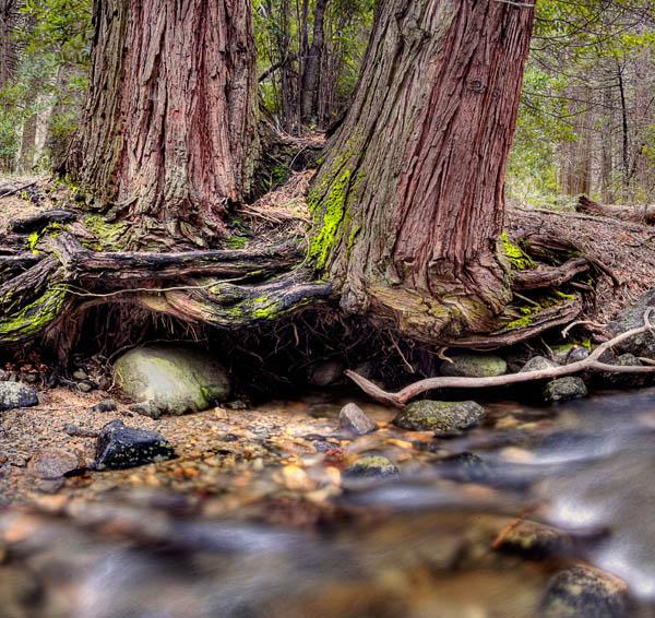 2006-04-21 Yosemite_MG_2172P