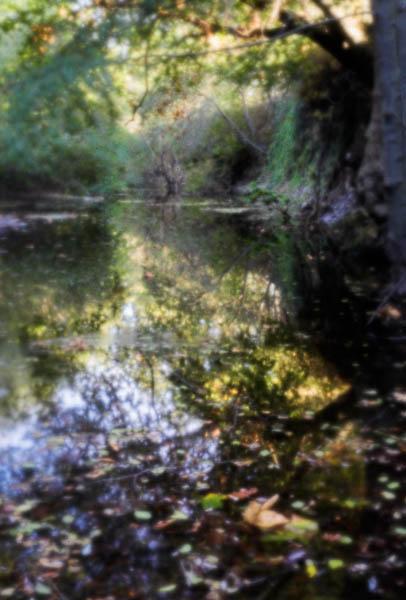 2006-10-09 Sunol_MG_5552