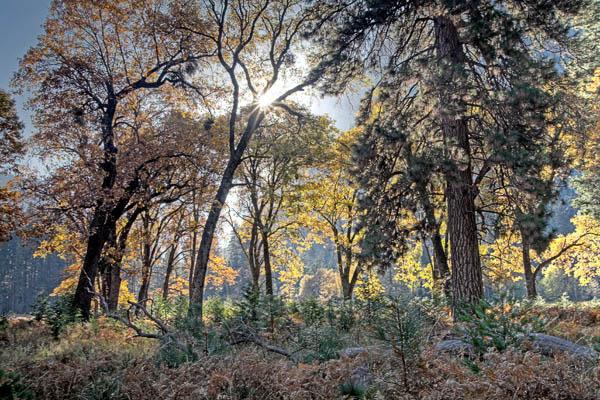 2006-10-29 Yosemite_MG_6168