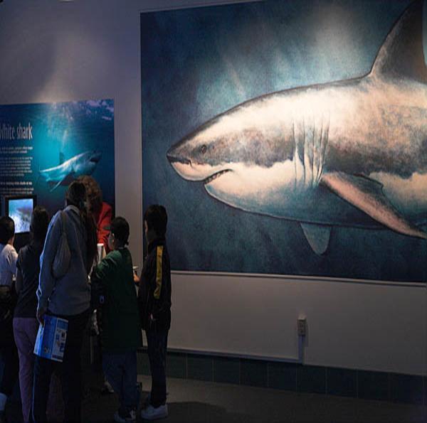 20060405_monterey_aquarium_mg_1687