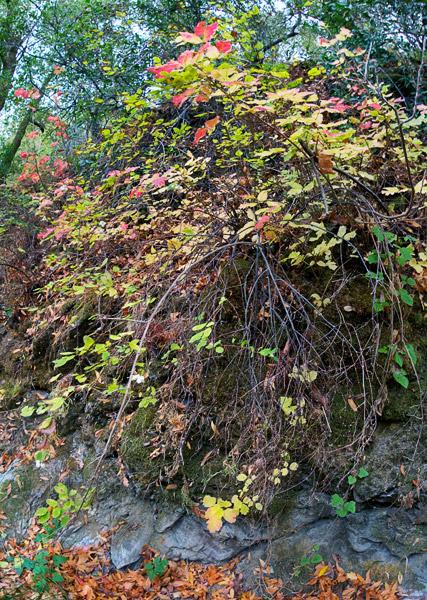 2008-10-19-Sunol-8341H