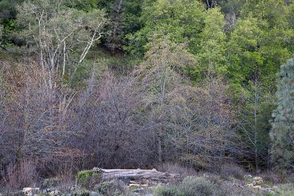 2009-01-10-Sunol-9655
