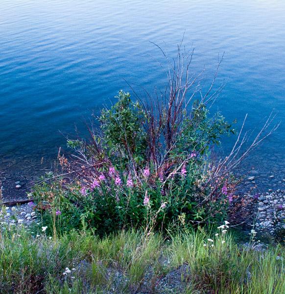 2009-08-03-Yellowstone-1491.jpg