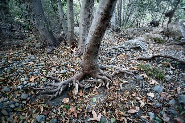 2009-10-04-Sunol-1884.jpg