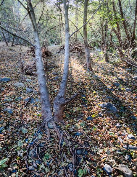 2009-10-04-Sunol-1727H2.jpg