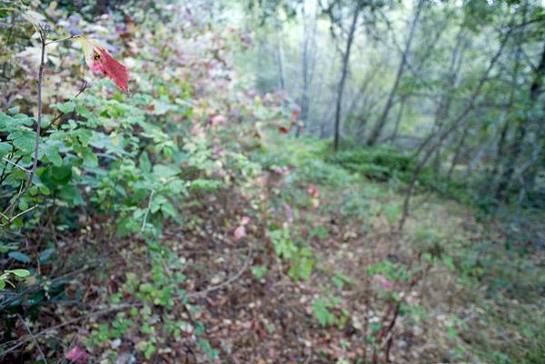 2009-10-22-Sunol-2097.jpg