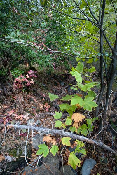 2009-10-22-Sunol-2145.jpg