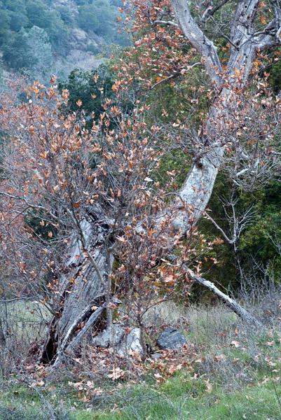2009-12-04-Sunol-2632.jpg