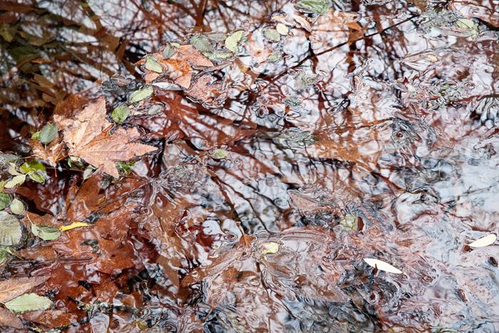 2009-12-19-Sunol-0086.jpg