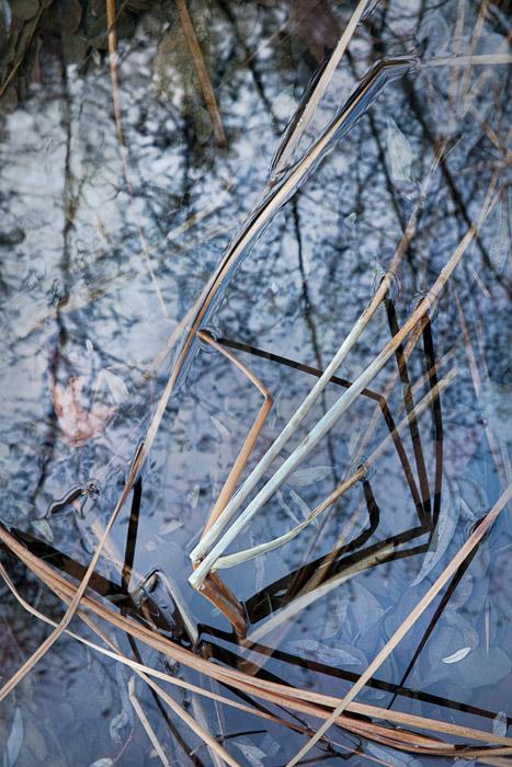 2010-01-03-Sunol-0938.jpg
