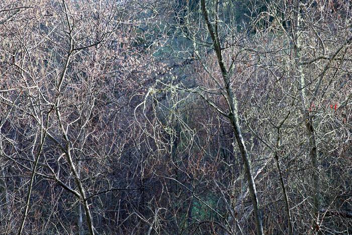 2010-01-10-Sunol-1158.jpg