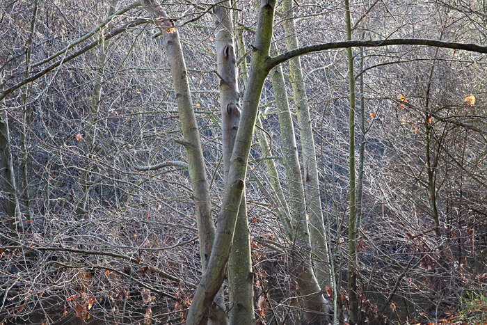 2010-01-10-Sunol-1221.jpg
