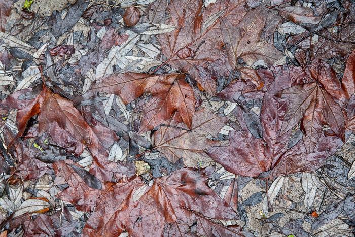 2010-01-20-Sunol-1609.jpg