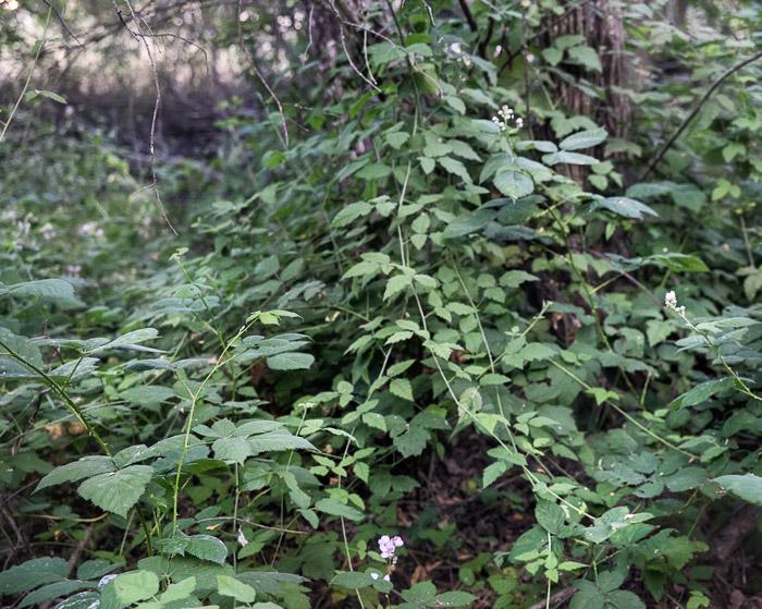 2010-06-20-Sunol-3866.jpg