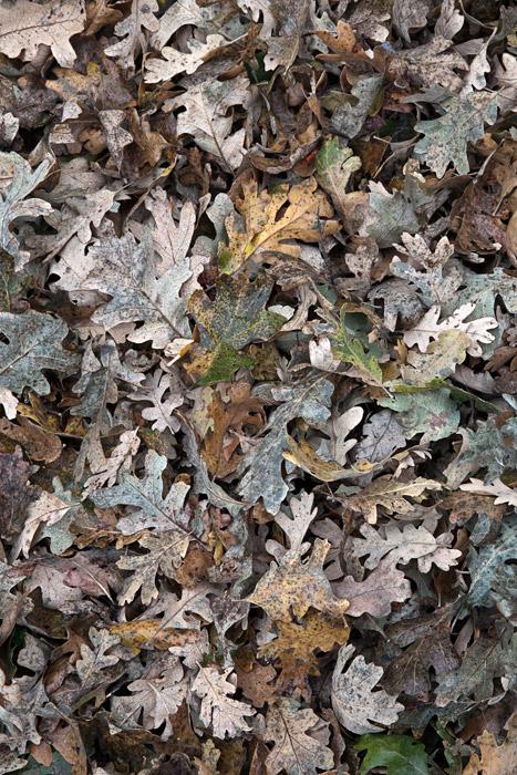 2010-11-19-Sunol-5983.jpg