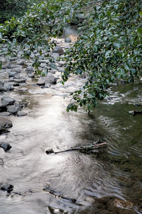 2010-07-01-Sunol-4231.jpg