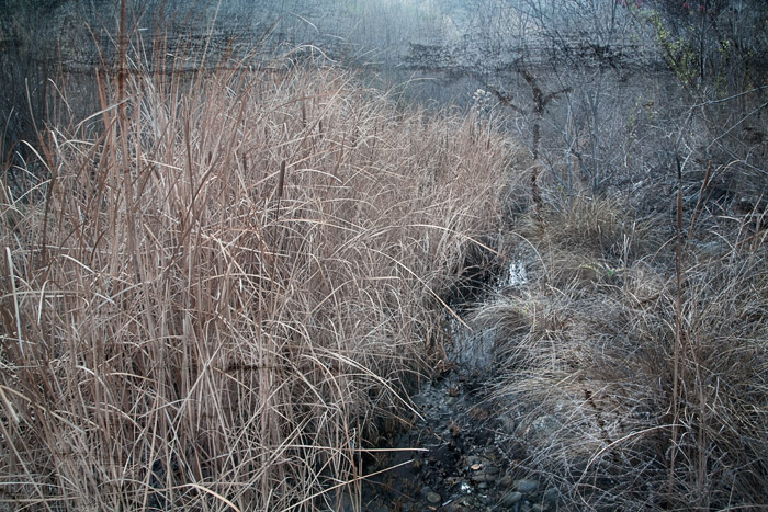 2009-01-18-Sunol-9900C.jpg