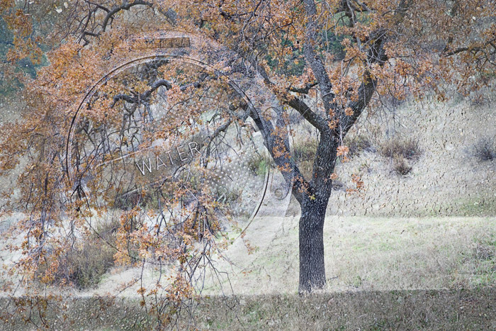 2009-12-19-Sunol-0155C2a.jpg