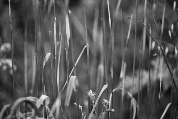 2012-06-10-Alameda-Creek-2907.jpg