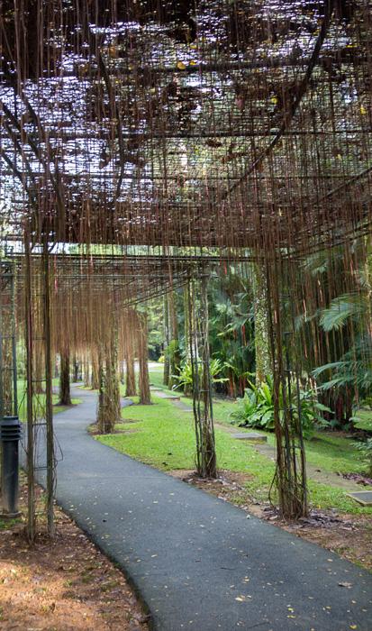 2013-02-26-Trip-Singapore-Botanical-Gardens-00990.jpg