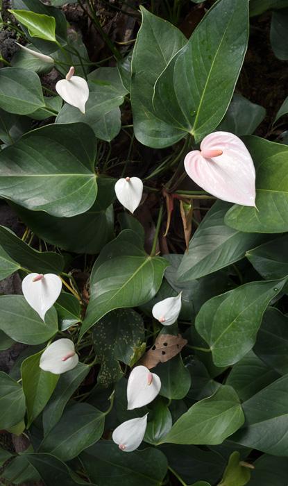 2013-02-26-Trip-Singapore-Botanical-Gardens-01140.jpg