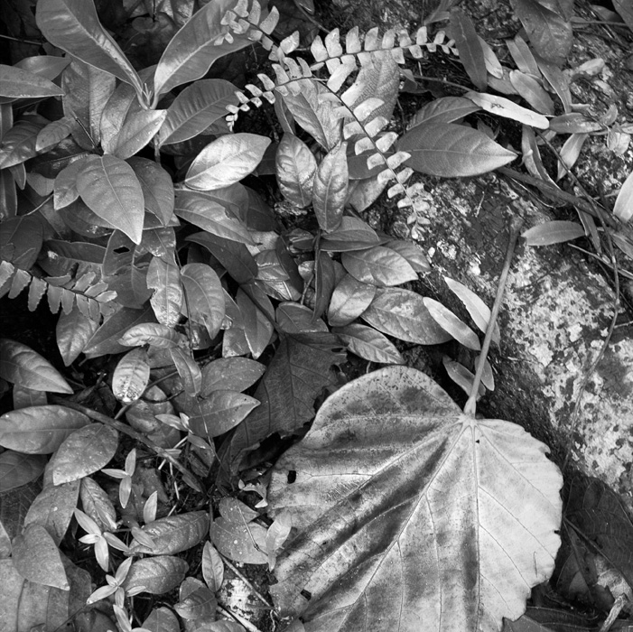 2013-02-26-Trip-Singapore-Botanical-Gardens-00986.jpg