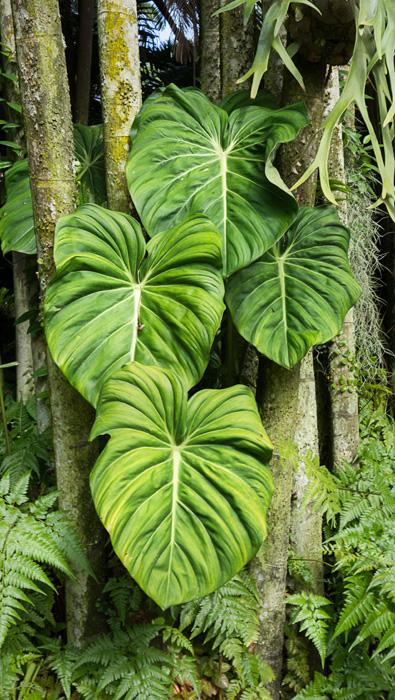 2013-02-26-Trip-Singapore-Botanical-Gardens-01071.jpg