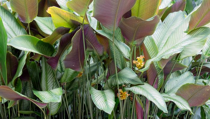 2013-02-26-Trip-Singapore-Botanical-Gardens-01189.jpg