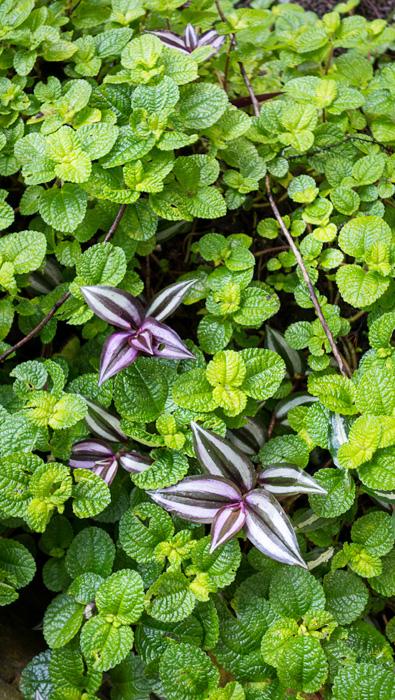 2013-02-26-Trip-Singapore-Botanical-Gardens-01019.jpg