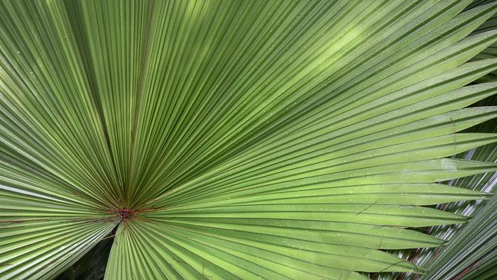 2013-02-26-Trip-Singapore-Botanical-Gardens-01113.jpg