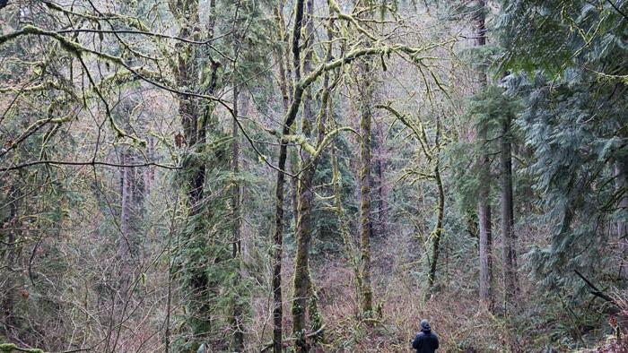 2013-12-28-Seattle-2159.jpg
