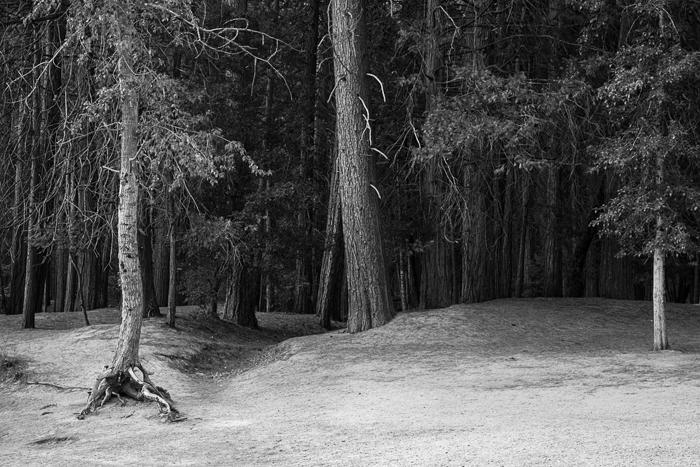 2014-07-21-Yosemite-3885.jpg